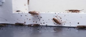 Day2day Pest Control Pest Control Bed Bugs Removal Rat Disposal Flea Removal Wasp Removal Tendring Essex
