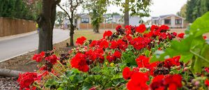 Oakleigh Park Homes Residential Park Holiday Homes Holiday Lodge Vacant Plots Leisure Lodge Part Exchange Tendring Essex